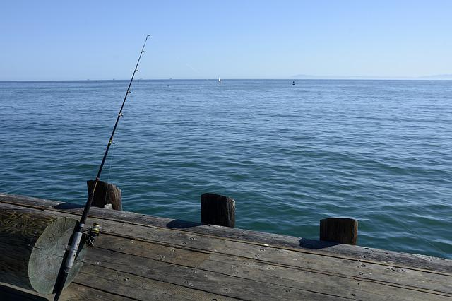 Fishing Reel, Fish, Fishing Rod, Hobby, Peaceful, Coast