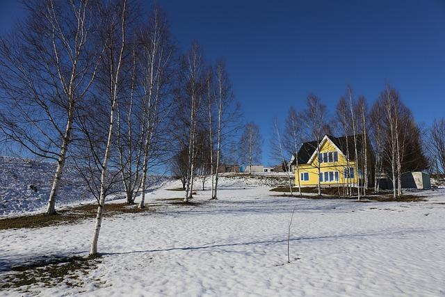 Hokkaido, Tree, Snow
