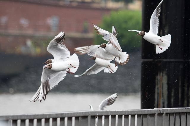Gulls, Elbe, Birds, Nature, Holiday