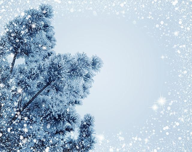 Snow, Christmas, Holiday, Frost, Christmas Tree