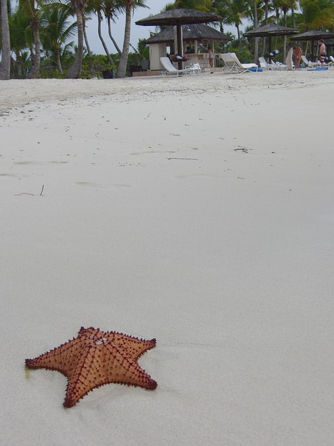 Starfish, Beach, Sand, Tropical, Vacation, Holiday