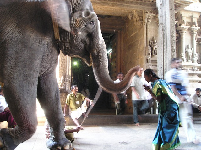 Elephant, Holy, Deity, Pray, Worship, Shiva, India