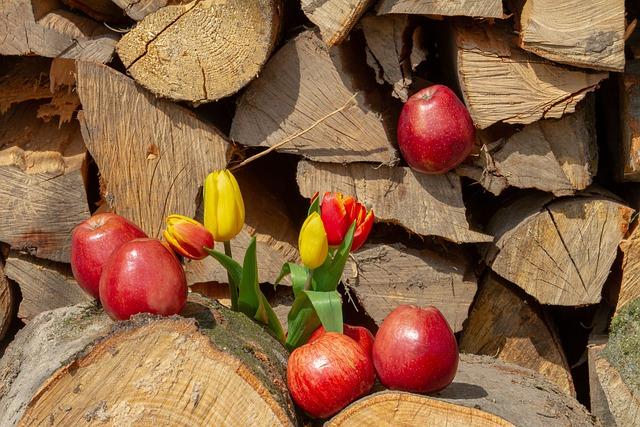 Apple, Wood, Flower, Tulips, Holzstapel, Red Apple