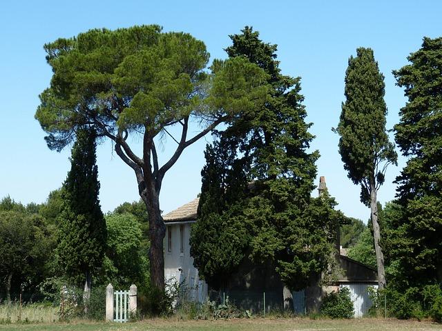 Provence, Rhône, France, Garden, South Of France, Home