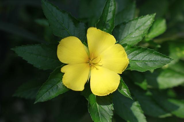 Flower, Ye, Flowers Bloom, Spring, Nature, Home Garden