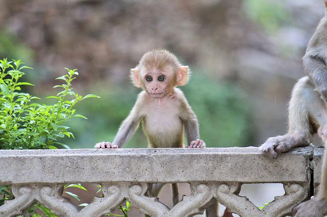Monkey, Animalia, Cute, Nature, Mammalia, Spring, Home