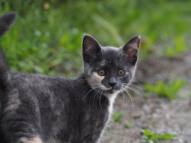 Cat, Nature, Feline, Pet, Gray Fur, Outdoor, Homeless