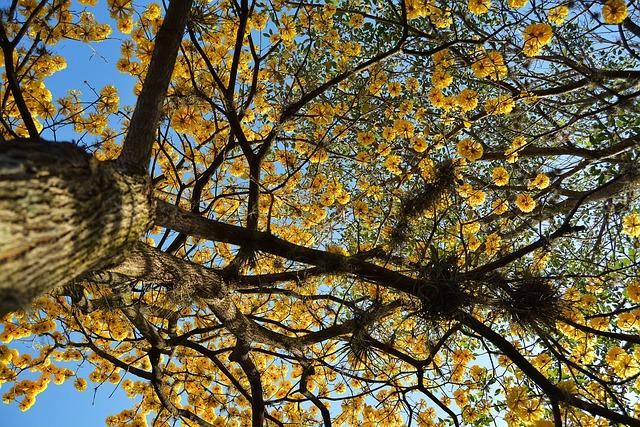 Tree, Cuts, Tegucigalpa, Honduras