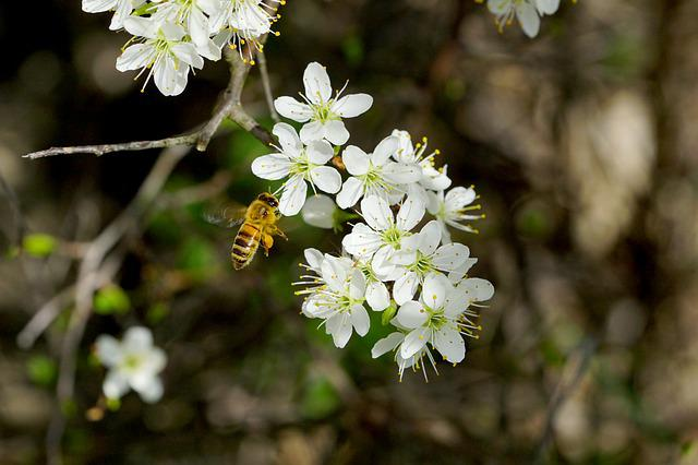 Nature, Plant, Tree, Blossom, Honey Bee, Flying