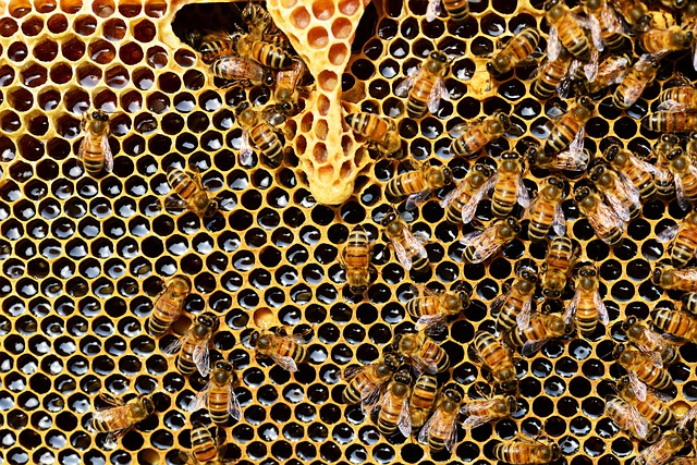 Queen Cup, Honeycomb, Honey Bee