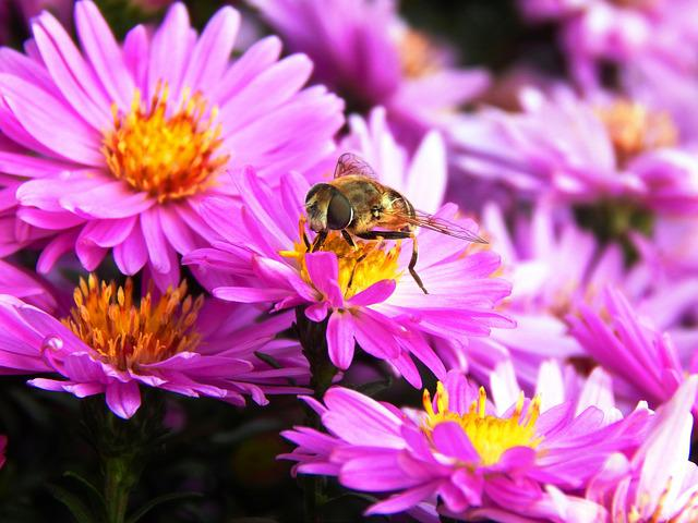 Bee, Flower, Insect, Honey Bee, Nature, The Bees