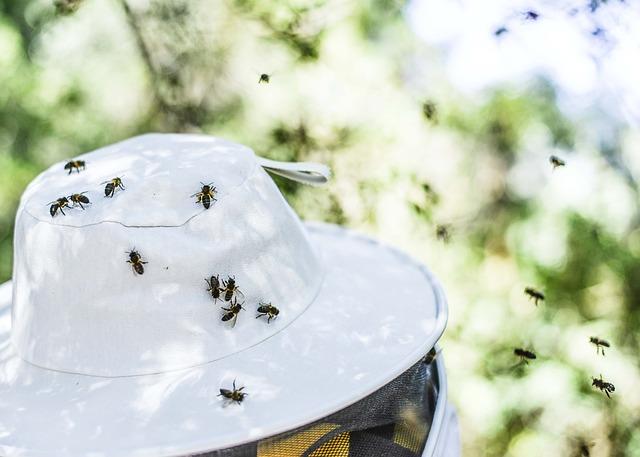 Outdoors, Nature, Winter, Bee, Honey