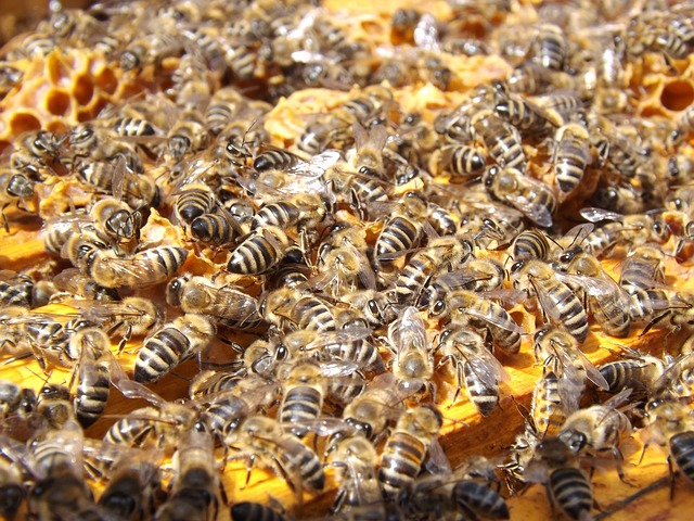 Bees, Beehive, Beekeeping, Honey, Busy, Honeybees