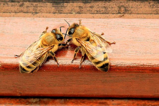 Honey Bees, Beehive, Hard Working, Bees, Honey, Insect