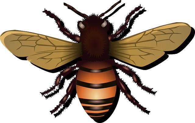 Honeybee, Bee, Insect, Fly, Honey, Nature, Beehive, Bug