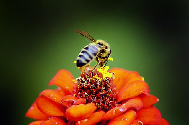 Nature, Insect, Bee, Flower, Outdoors, Honey, Closeup