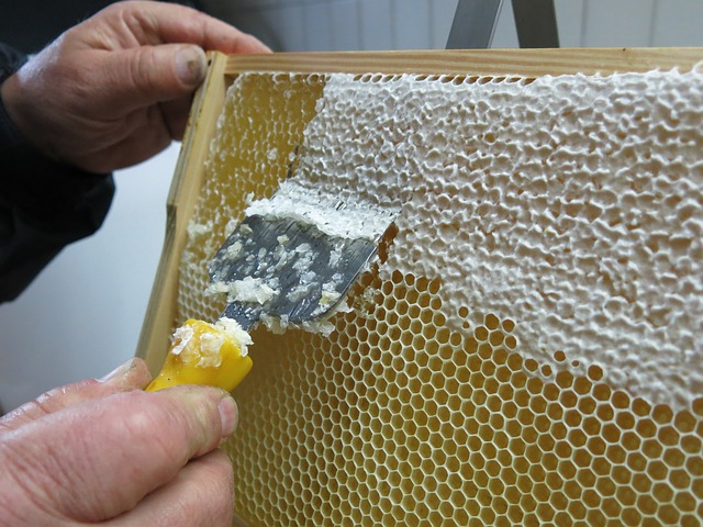 Honey, Honeycomb, Uncapping, Frames, Pike Perch