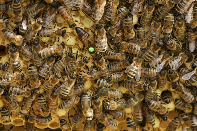 Bees, Queen Bee, Beehive, Honeycomb, Beekeeping, Queen