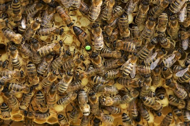 Bees, Queen Bee, Beehive, Honeycomb, Beekeeping, Queen