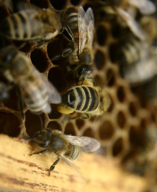 Bees, Beekeeping, Honey Bees, Honeycomb, Beehive, Hive
