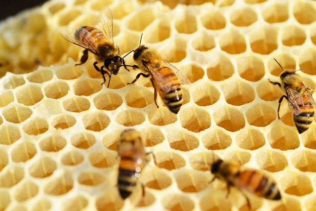 Bees, Building Honeycomb, Honey, Honey Bees, Honeycomb
