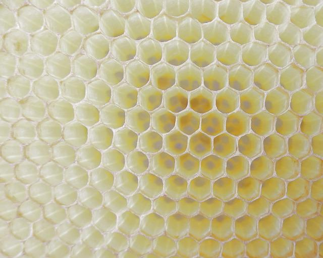 Honeycomb, Work Bee, Cell