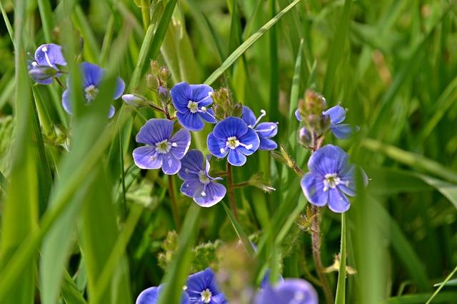 Nature, Flowers, Small Flowers, Honorary Award