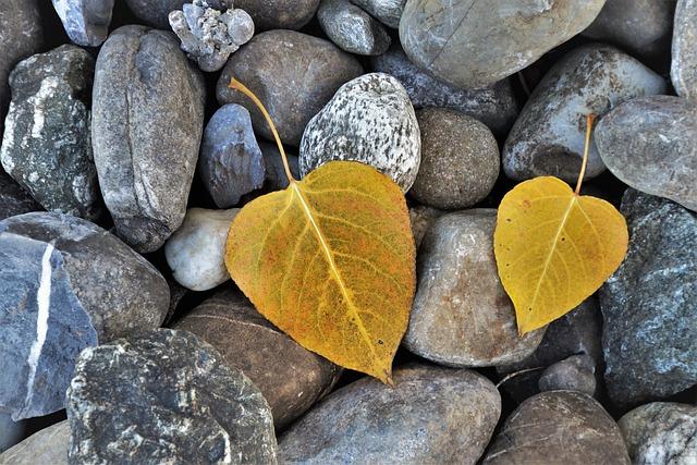 Foliage, Yellow, Autumn, Nature, Mood, Hope, Gray