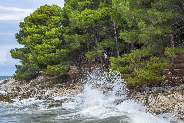 Sea, Waves, Trees, Water, Beach, Rocks, Horizon, Spray