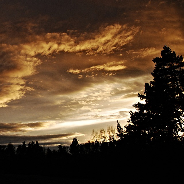 Sunset, Silhouettes, Tree, Horizon, Sky, Light
