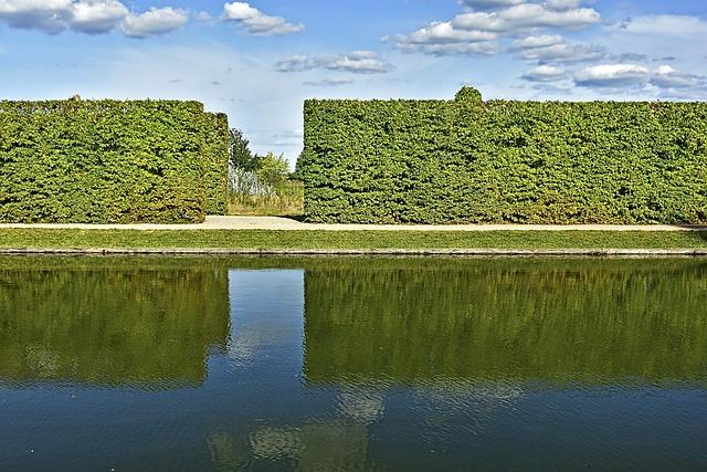 Hedge, Hornbeam, Hornbeam Hedge, Water, Mirroring