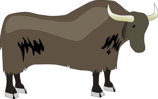 Yak, Horned, Hooves, Mammal, Bovine, Himalaya, Tibetan