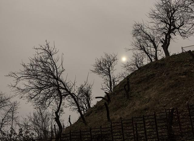 Autumn, Bare, Fence, Hill, Horror, Scary, Trees