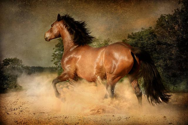 Mammal, Horse, Equestrian, Equine, Action, Dust, Gallop