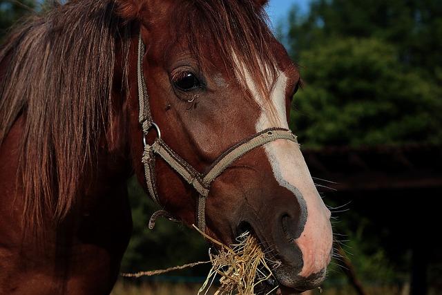 Horse, Nature, Foal, Animal, Equine, Mane, Farm, Horses
