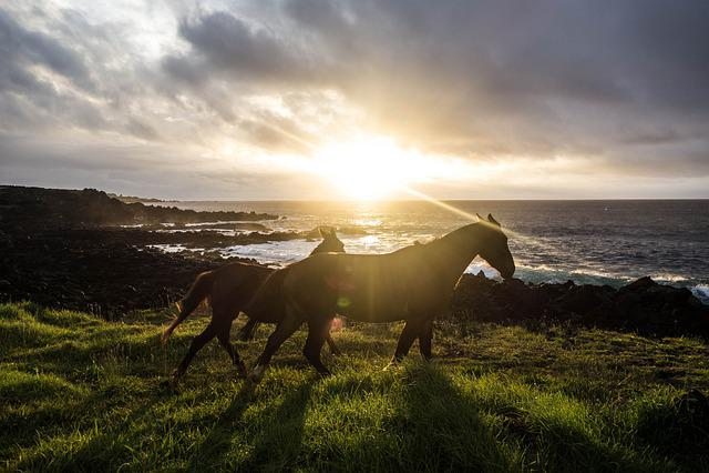 Horse, Sunset, Beach, Animal, Landscape, Pasture