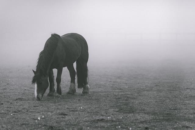 Animal, Animal Photography, Field, Fog, Horse