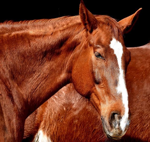 Horse, Brown, Portrait, Beautiful, Animal