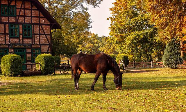 Animals, Horse, Farm, Nature, Brown, Wildlife