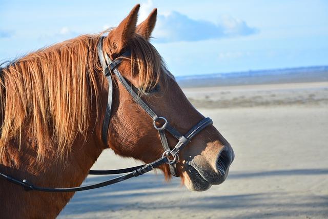 Horse, Profile Head Horse, Brown, Plays Horse, Mane