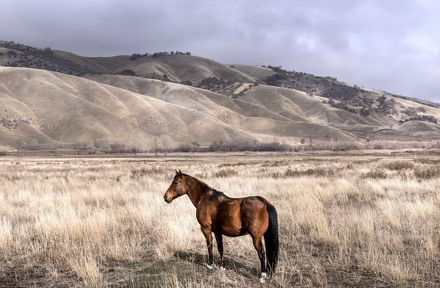 Horse, Coupling, Paddock, Pasture, Graze, Meadow, Brown