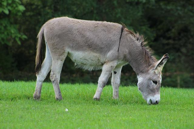 Donkey, Horse, Animal, Farm