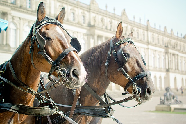 Horse Drawn Carriage, Horse Head, Halter, Blinkers