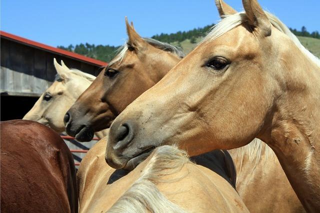 Cavalry, Mammal, Animal, Horse, Equestrian