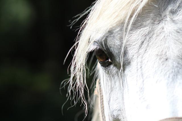 Horse, Eye, Paardenoog, Animal, Eyelash, Moons