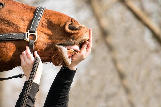 Horse, Nose, Nostrils, Foot, Flehmen, Hand, Human