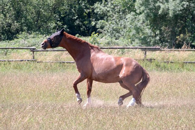 Horse, Stand Up, Forelegs, Attention, Fuchs, Animal