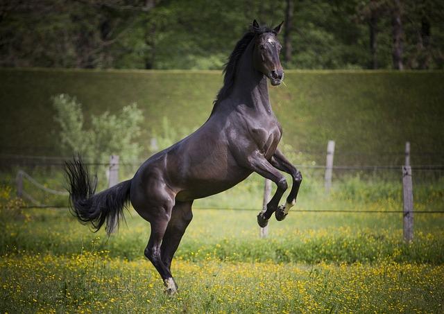 Horse, Equine, Prairie, Free, Games, Mare, Freedom, Run