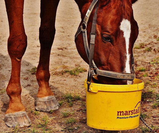 Horse, Eat, Satisfied, Brown, Horse Head, Animal
