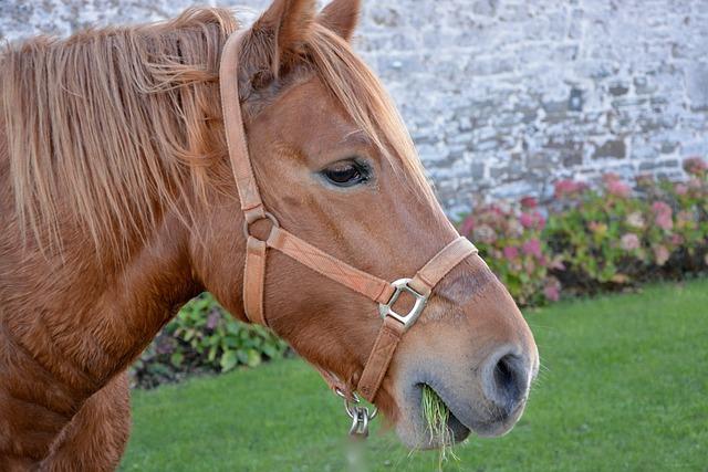 Horse, Head Horse Profile, Mane, Equine, Horse Head